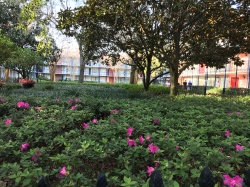 Flowers at Port Orleans: French Quarter