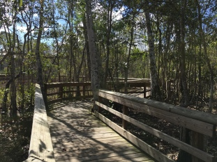 A walkway at Mead Botanical Garden in Orlando, Florida | Ross and Jamie Adventure