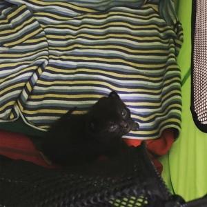 Bear, small kitten | Ross And Jamie Adventure