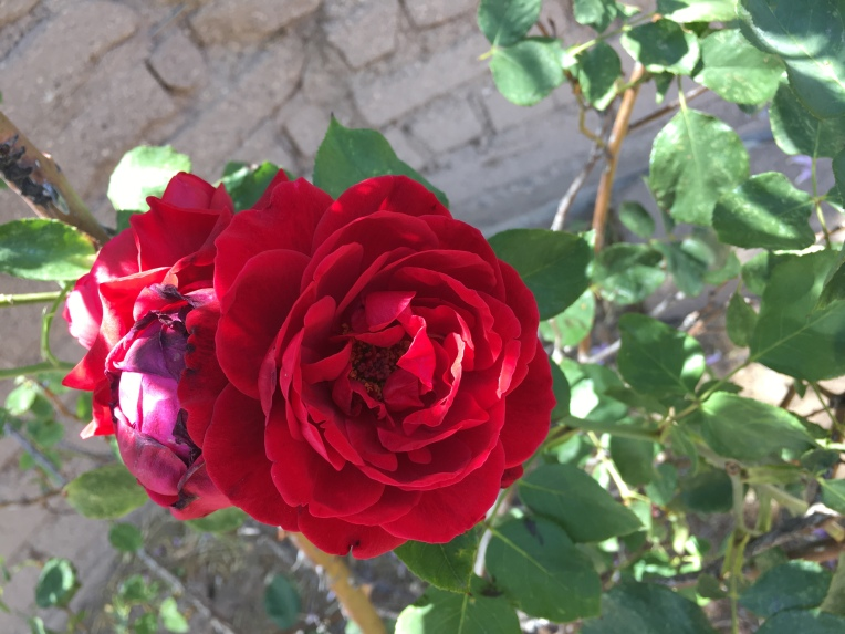 Flower, Las Cruces, NM | Ross and Jamie Adventure