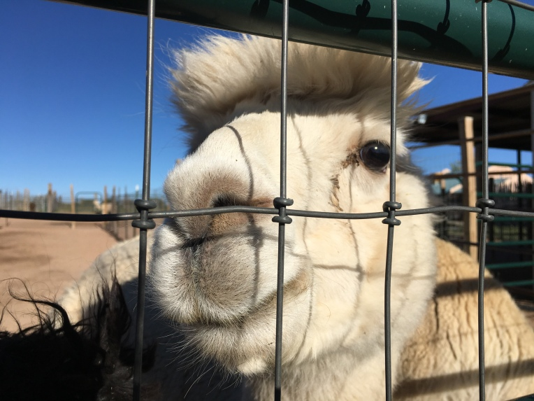 Harvest Hosts, New Mexico | Ross and Jamie Adventure